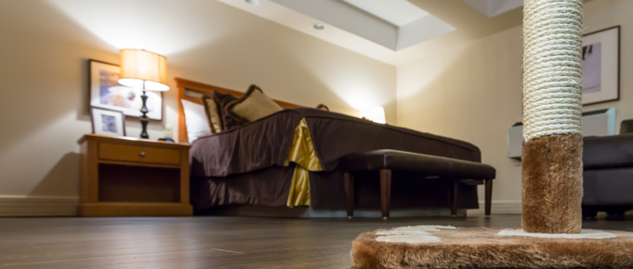 Pet Friendly Hotels Edmonton | The Executive Royal Hotel
